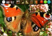 Belles Images de Papillon Cachées