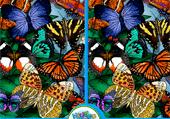 Différences et papillons