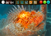 Images de poissons à retrouver