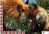 Numéros cachés et renards