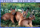 Chiffres cachés et animaux de la savane