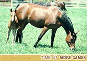 Chiffres cachés au milieu des chevaux