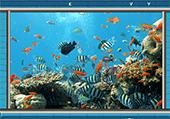Lettres cachées dans les coraux