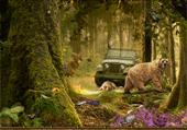 Photos d'animaux en forêt