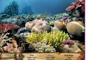 Cherche et Trouve sous la mer